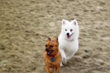 Pet Friendly Uptown Dog Park