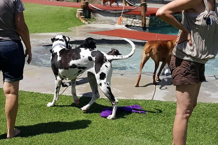 Pet Friendly Country Kennels Dawg Water Park