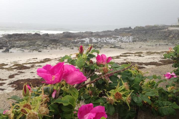Pet Friendly Mother's Beach