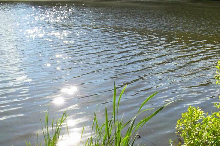 Pet Friendly Horn Pond
