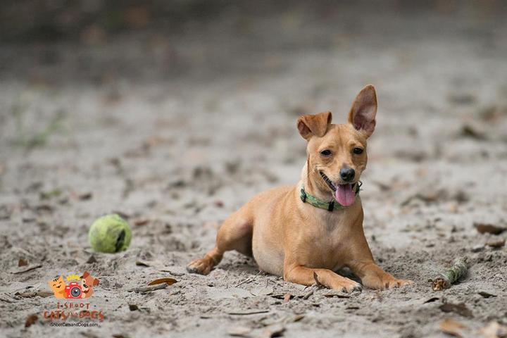 Pet Friendly Minneola Dog Park