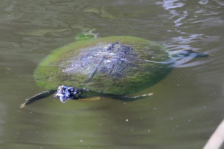 Pet Friendly Audubon Newhall Preserve