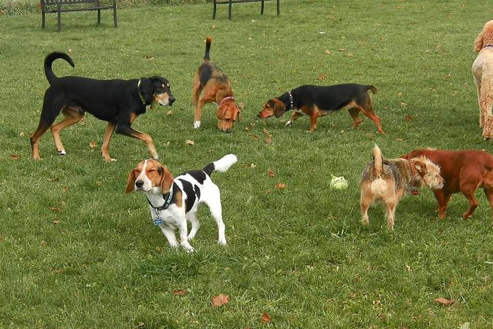 Pet Friendly Margaret Prickett Dog Park