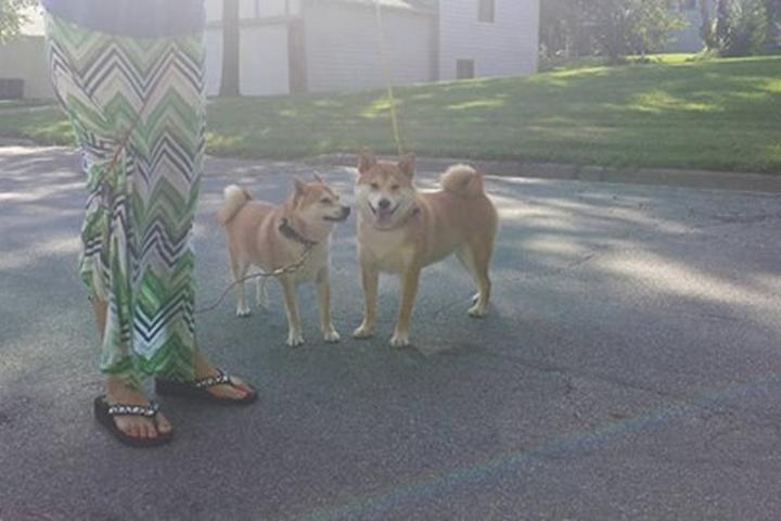 Pet Friendly Savage Dog Park