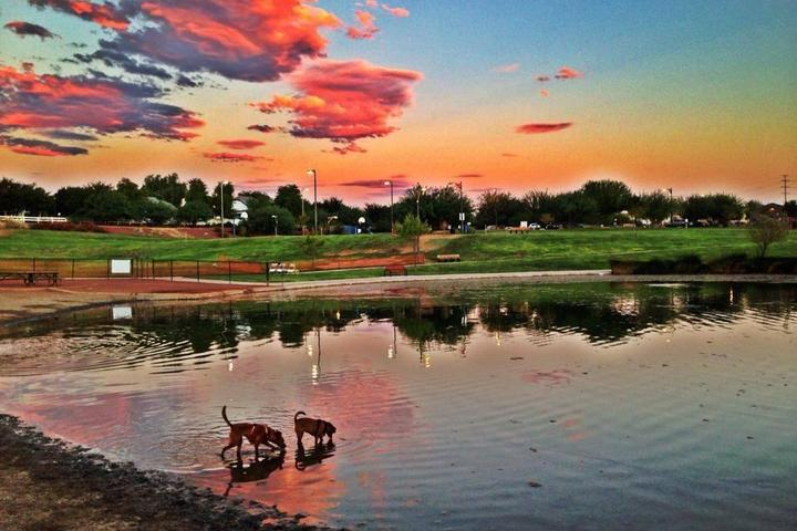Pet Friendly Cosmo Dog Park