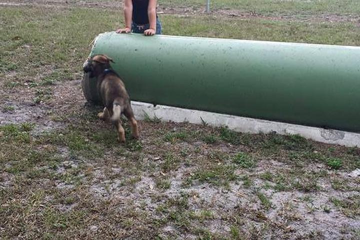 Pet Friendly Maravilla Park