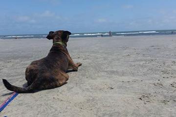 Pet Friendly Kiawah Beachwalker Park