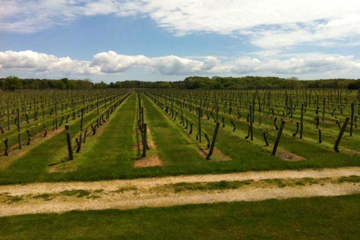 Pet Friendly Corey Creek Vineyards