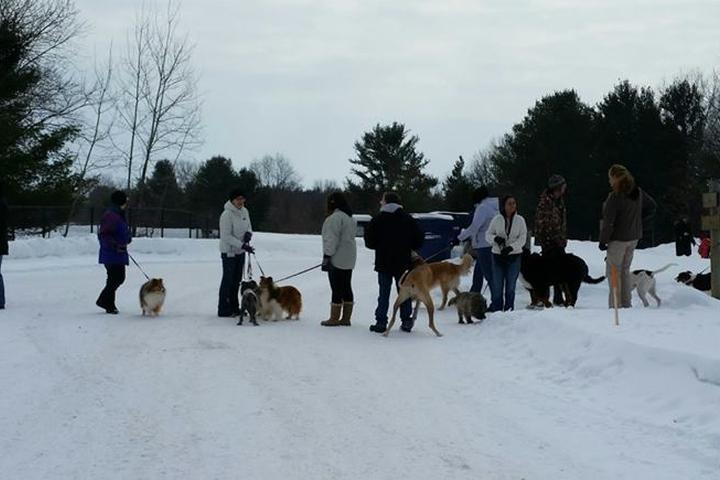 Pet Friendly Silver Lake Dog Park