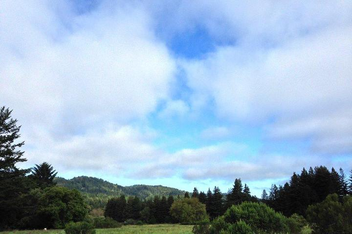 Pet Friendly Henry Cowell Redwoods State Park