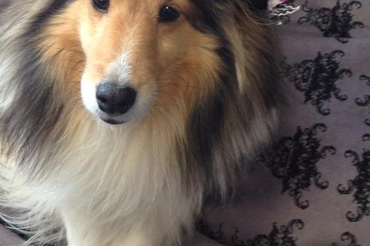Dog Friendly Activities In Corpus Christi Tx Bring Fido