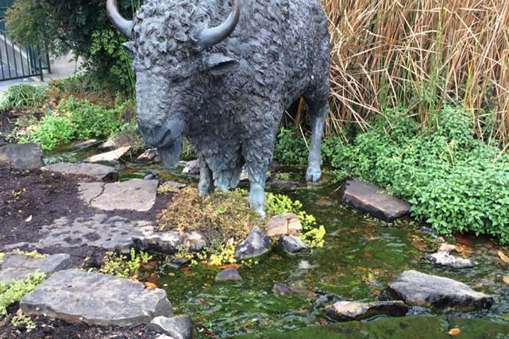 Pet Friendly Buffalo Trace Distillery