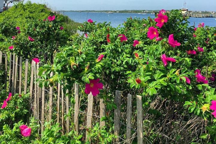 Pet Friendly Block Island Beaches