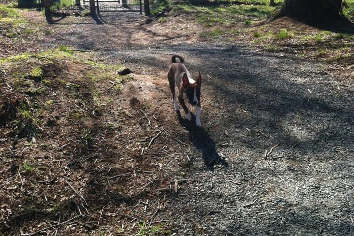 Pet Friendly North Bonson Park