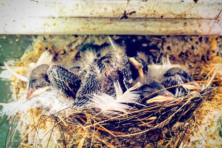 Pet Friendly Abbott's Mill Nature Center