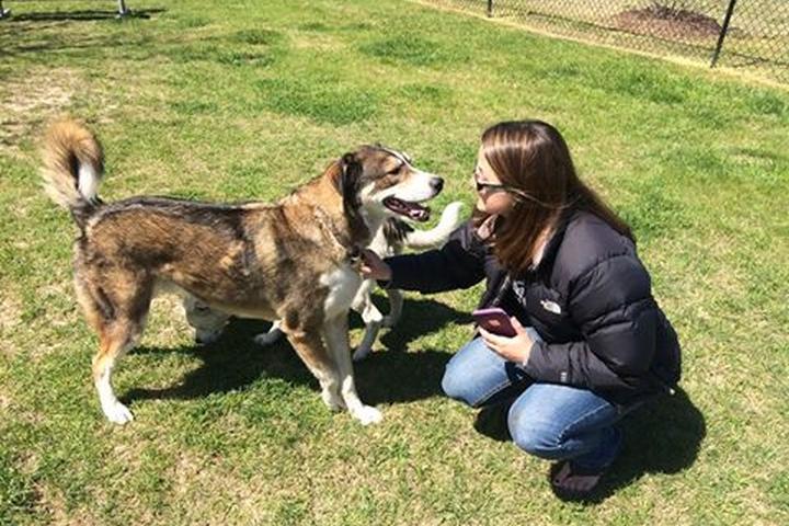 Pet Friendly Holden Beach Dog Park