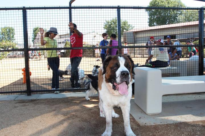 Pet Friendly Whittier Dog Park