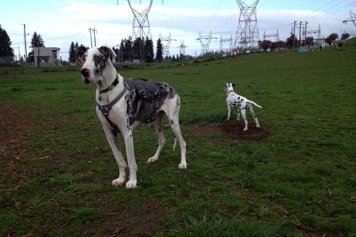 Pet Friendly Ross Dog Park