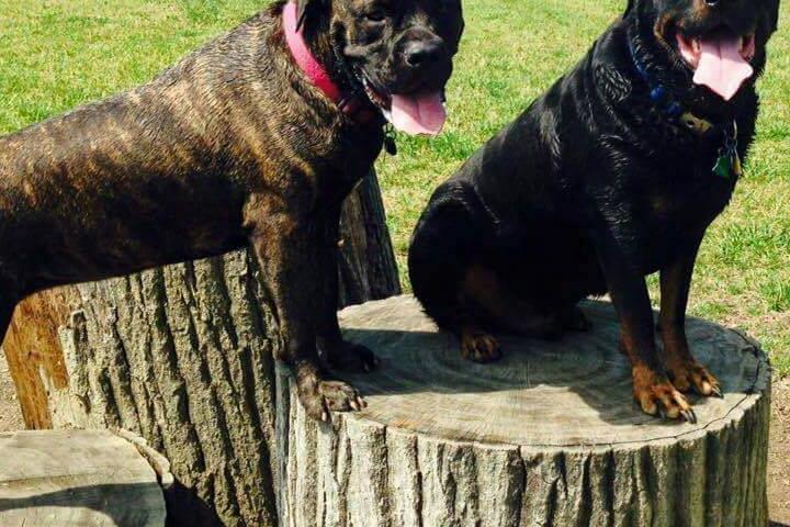 Pet Friendly Canine Meadow Dog Park