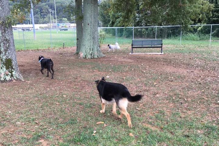 Pet Friendly Guntersville Dog Park at Tom Jackson Park