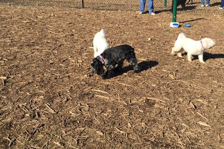 Pet Friendly Allen Township Dog Park