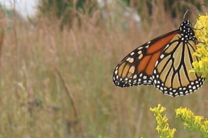 Pet Friendly Natural Lands Trust's Willisbrook Preserve