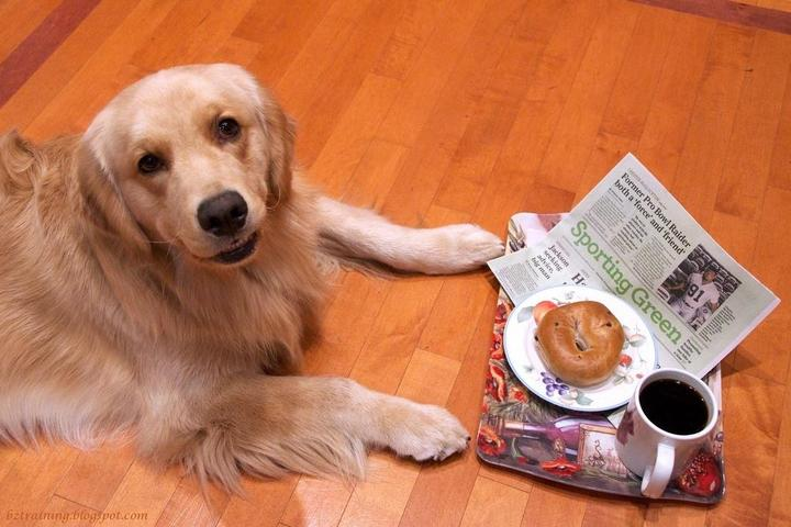 Pet Friendly Top Dog Kitchen