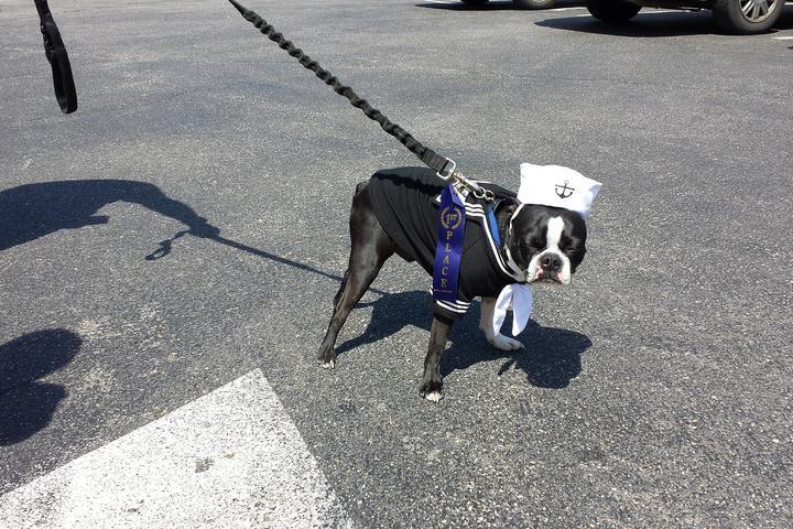 Pet Friendly Ogunquit Marginal Way Dog Walk