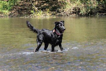 Pet Friendly Russian River Adventures