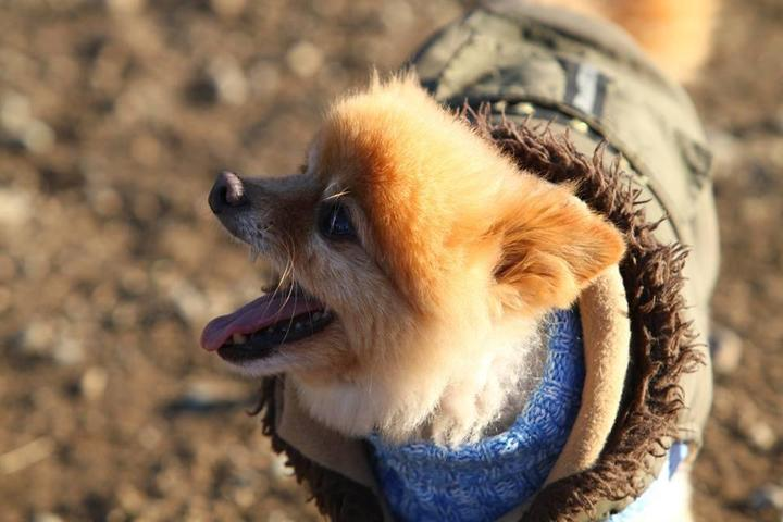 Pet Friendly Bandix Dog Park