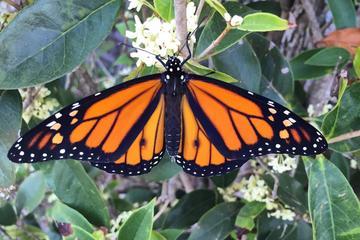 Pet Friendly Houston Arboretum & Nature Center