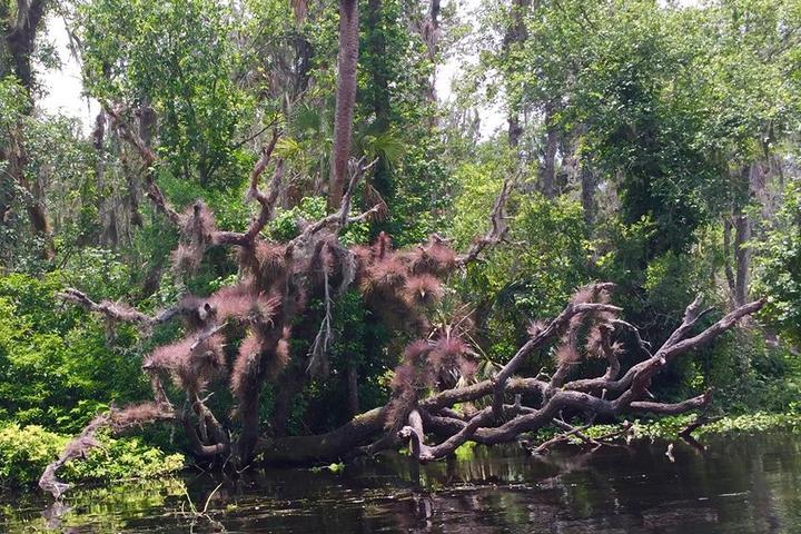 Pet Friendly Lower Wekiva River State Preserve