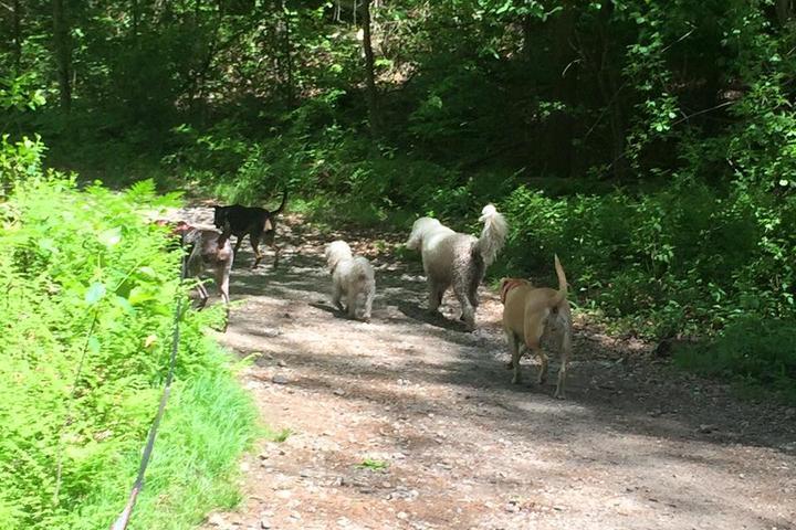 Pet Friendly Middlesex Fells Reservation