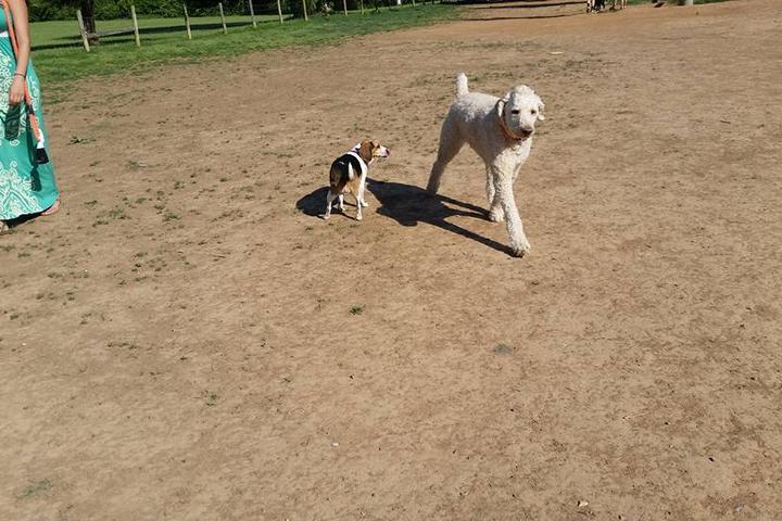 Pet Friendly Murfreesboro Bark Park