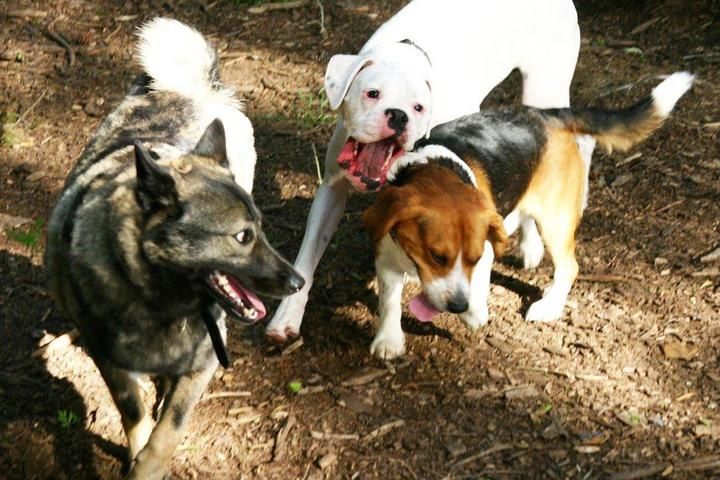 Pet Friendly The Preserve Dog Park
