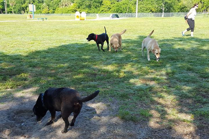 Pet Friendly 17th Street Paw Park