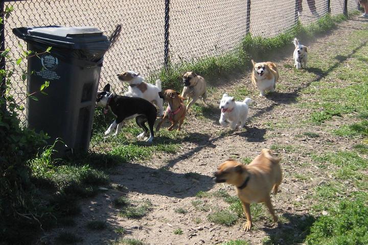 Pet Friendly Alameda Dog Park