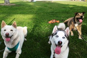 Pet Friendly Arcadia's Dog Park at Eisenhower Park