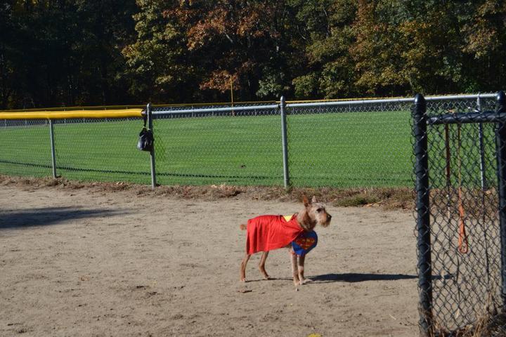 Pet Friendly Barrington Dog Park at Haines Park