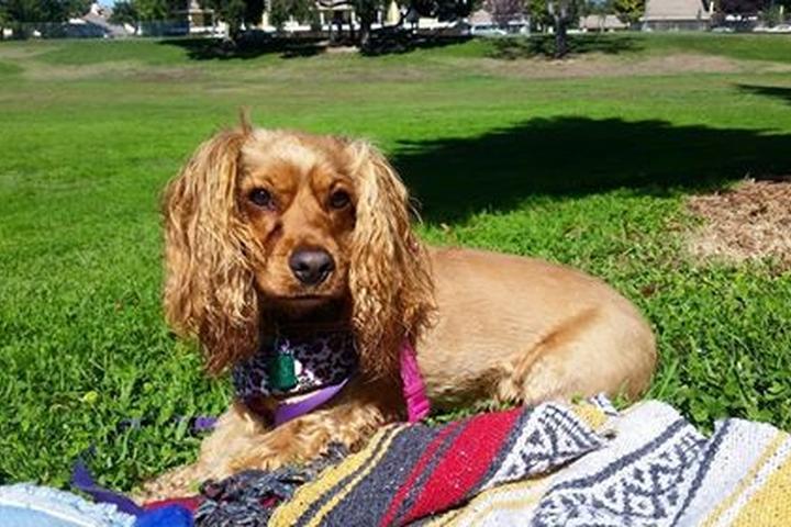 Pet Friendly Beckman Dog Park