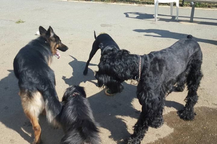 Pet Friendly Bell Branch Dog Park