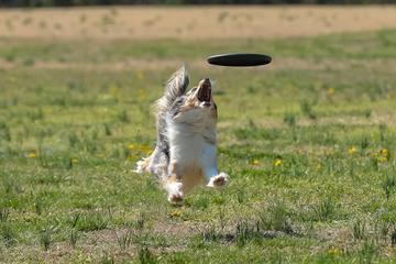 Pet Friendly Broward Disc Dogs