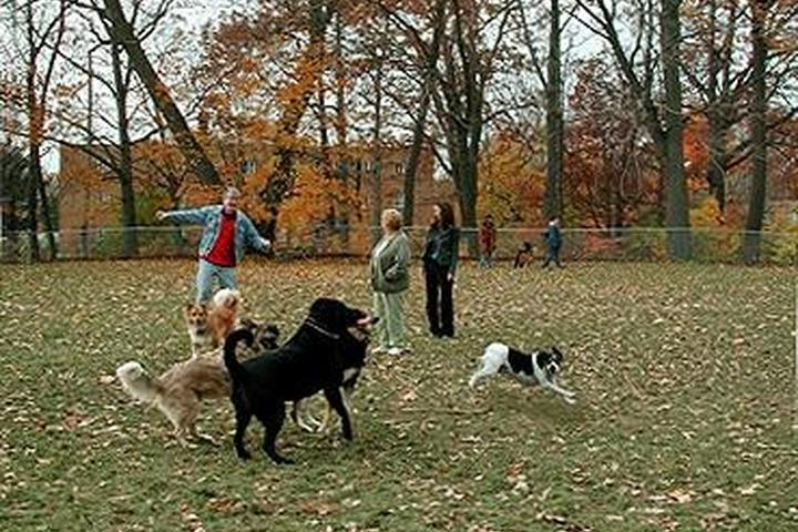 Pet Friendly Quarry Dog Park
