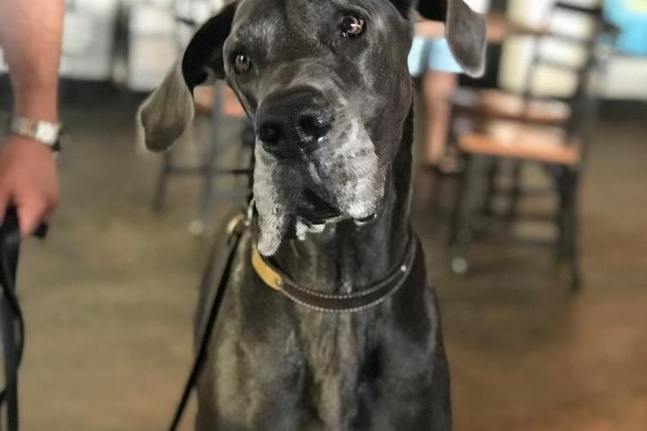 Pet Friendly Grove Roots Brewery