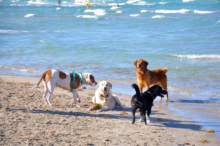 Pet Friendly Emerald Hills Lakes Dog Park