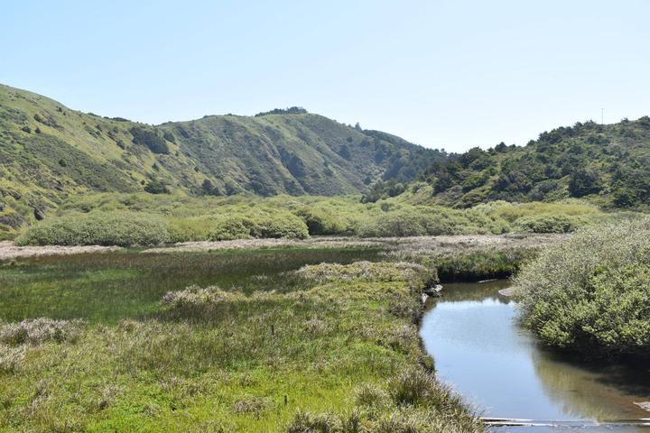 Pet Friendly Sonoma Coast State Park