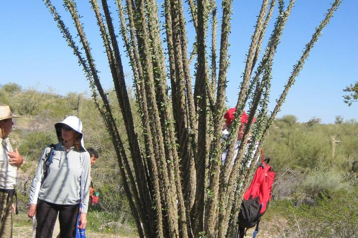 Pet Friendly Creating Medicine from Desert Plants