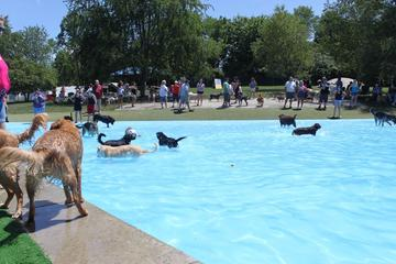 Pet Friendly Lucky Paws Dog Park and Pool