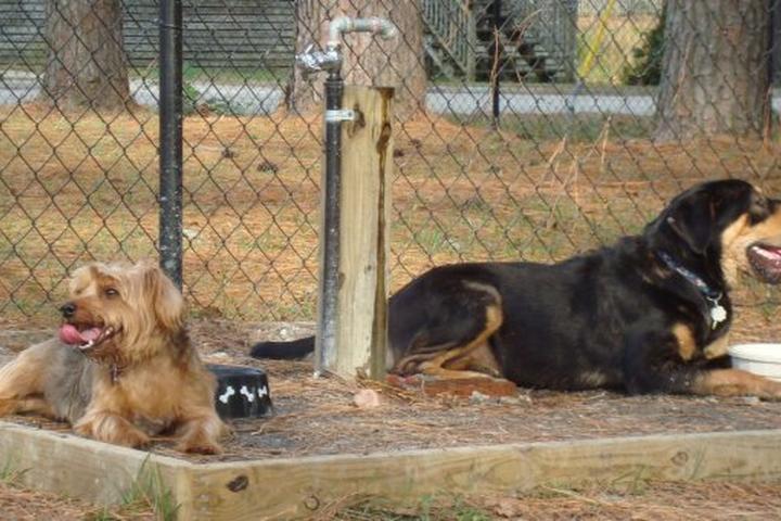 Pet Friendly Washington Off Leash Dog Park