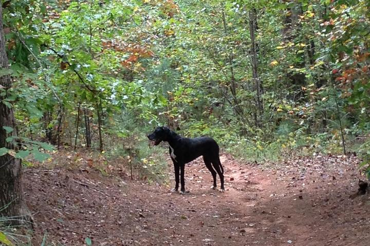 Pet Friendly Overmountain Victory Historic Trail on Overmountain Vineyards